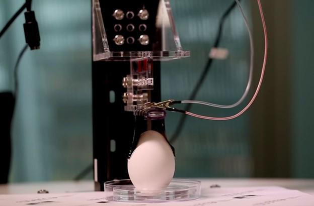 robot za jaja